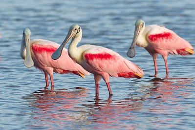 The Time To Shine Eco Pond, Flamingo, Everglades National Park Florida © 2012