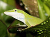 anole0902