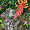 bromeliad, costa rica