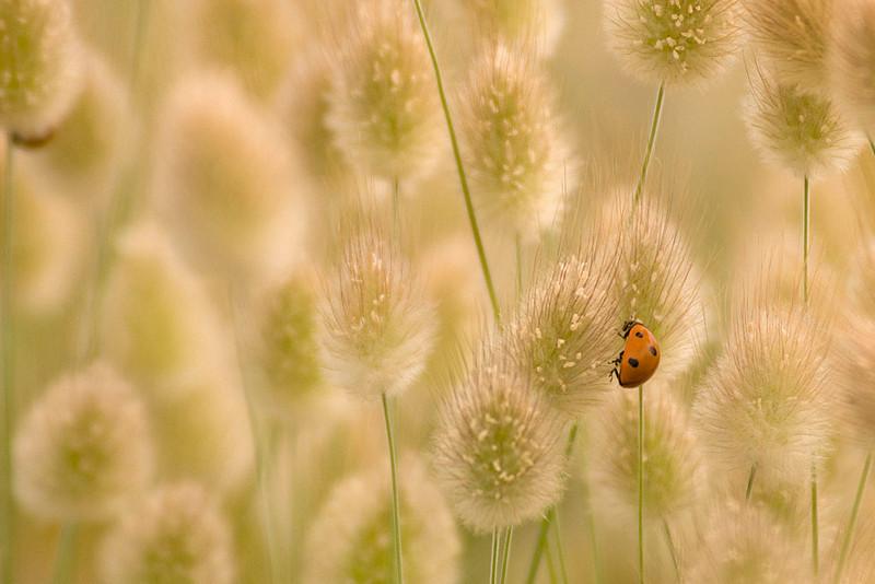 Patrullando la pradera/ Patrolling the meadow