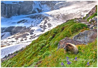 Marmot country.