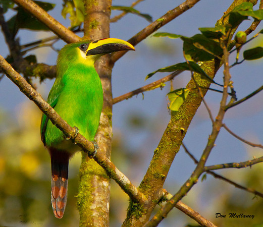 Birding in Nicaragua -  Feb. 2012