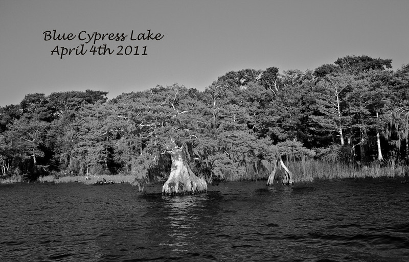 Blue Cypress Lake view in B&W