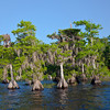 Cypress trees line the shores of this lake.