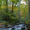 A running stream along one of many trails - Great Smoky Mtn, NP