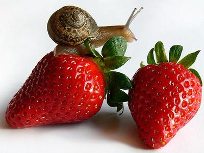 Strawberry Crunch
