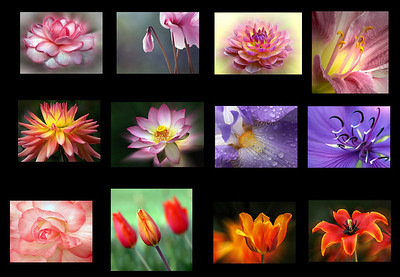 These are some of my favorite flower shots