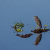 Green Heron Isle - Peaceful Waters Sanctuary, Wellington, FL