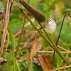 Palm Warbler, view two - Wakodahatchee Wetlands, Delray Beach, FL