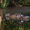 A pair of beautiful Wood Ducks. <br /> <br /> Peaceful Waters, Wellington, FL