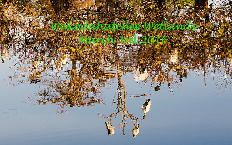 Title Slide - Rockery Reflection -