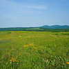 """A view from """"bald"""" at the rear of the stone house. -Beech Hill Preserve, Rockport, Me."""