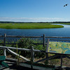 This is a composite of 3 photos taken at the Audubon Nature Center at Scarborough Marsh, Me.