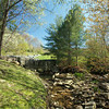 Spring on the Upper Pond Trail - Beech Mtn. NC