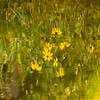 The wildflowers reflecting in the stream have a Monet feel.