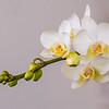 White Orchid - Boynton Beach, FL