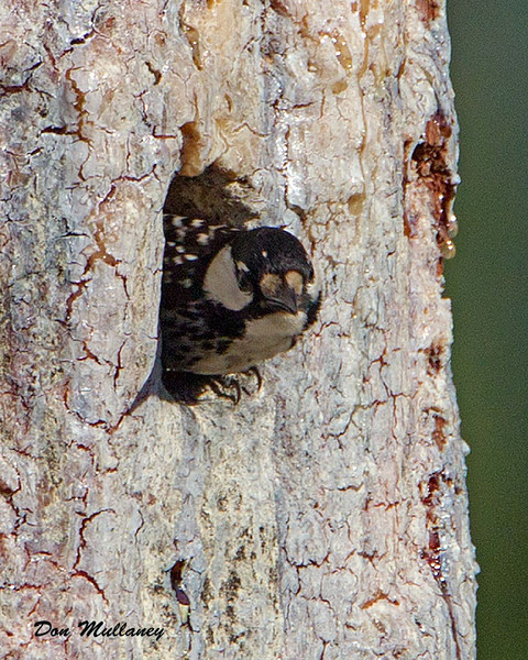The female leaving the nest - Holley Shelter Gameland