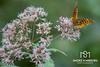 Moth Appeal