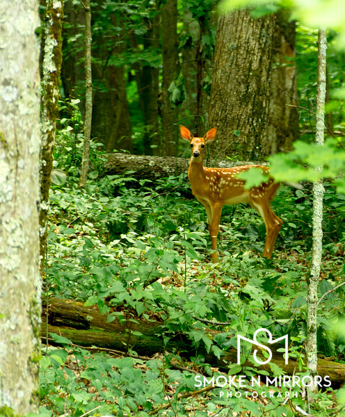 Deep Woods Fawn<br /> <br /> Where is your mommy, little deep woods fawn.  Keep her near that you may learn for tomorrow.