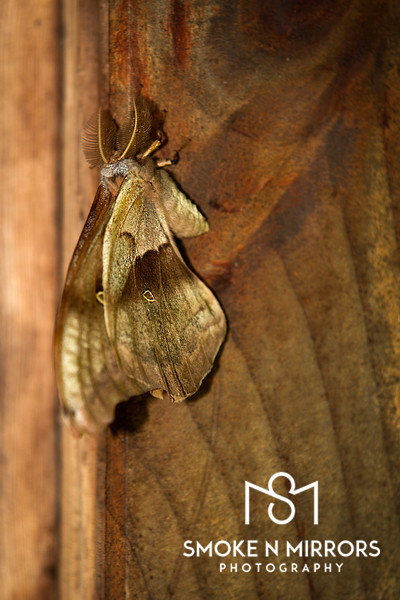 I Am Moth