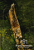 Who's Not Home<br /> <br /> A storm ravaged tree has a second life for a forest creature.