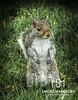 Squirrel Exec