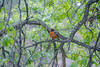 Robin at Bear Lodge, Devils Tower NP (May 2012)
