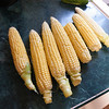 The first six ears of corn harvested from our garden. Hopefully, next years crop will be better since there will have been the opportunity to improve the soil over the winter.