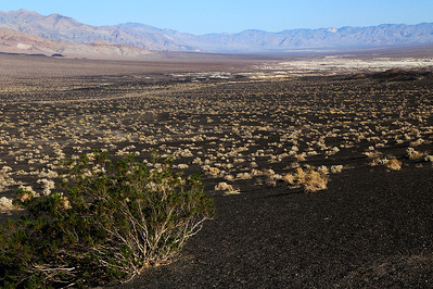 Lava Field In Death Valley