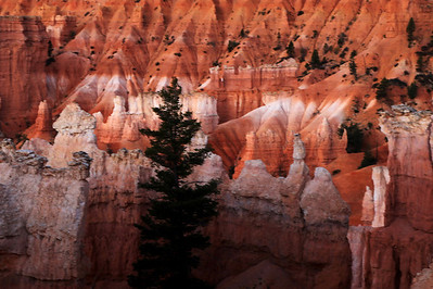 Queen's Garden Trail At Sunrise In Bryce Canyon
