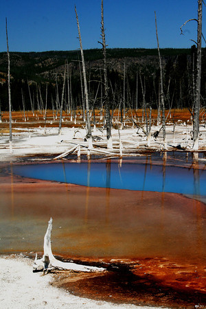 Colorful Mineral Pool In Yellowstone