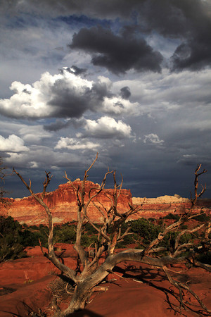 At Capitol Reef National Park