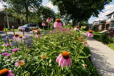 The parkway garden.