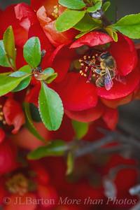 Spring in our Garden 2016