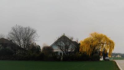 Willow Yellow