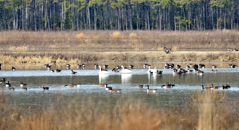 Blackwater National Wildlife Refuge - February 8, 2015