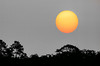 Back in September 2011, a wild fire in the Okefenokee Swamp was at times filling our Northeast Florida skies with smoke. On this particular morning, as I was on my way to Big Talbot Island, I saw the sun rising above the marsh at Simpson Creek. The smoky skies dimmed the sun so it looked like an orange ball floating above the horizon, affording a view similar to what one might see looking through smoked glass. I knew better than to look directly at the sun, but it occurred to me that this might make an interesting photograph.  If you look closely, you will see a couple of sun spots. I enlarged the sun relative to other elements in this image to make the sun spots a little easier to see. I also desaturated all but the sun, which actually didn't make a big difference.