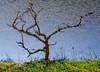 """Alternative Tree"" Big Talboit Island this morning"