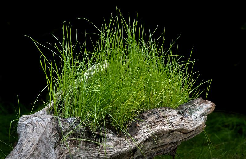 Handful o' Grass