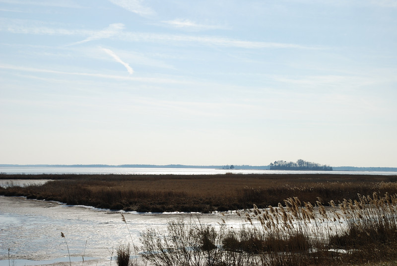 Blackwater National Wildlife Refuge - 01/16/11