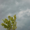 Tree in Storm, La Plata, Maryland - 06/11/11