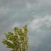 Tree in Storm, La Plata, Maryland - 06/11/11