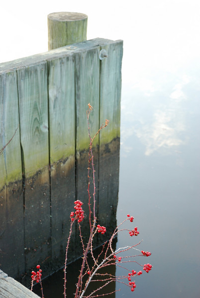 At the Pocomoke River - 02/26/11