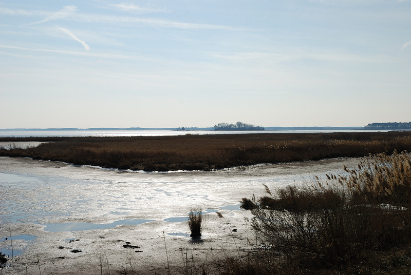 Blackwater National Wildlife Refuge - 01/16/11