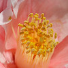 04/14/13 - Spring only comes once a year, so we spent the weekend enjoying it!<br /> ~Camellia