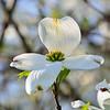 04/20/13 - Spring Blossoms