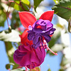 "04/14/13 - Spring only comes once a year, so we spent the weekend enjoying it!<br /> ~Fuschia/""Ballerina Flower"""