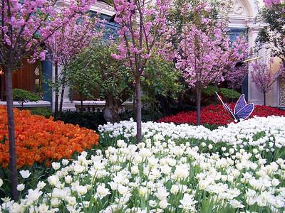 Belagio Flower Garden - Las Vegas, NV