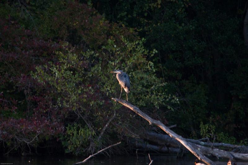 Parvin State Park - October 2008-14