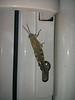 Cricket on our door in Pefkos